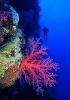 Под водой_119