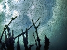 Под водой_128
