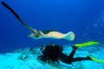 Под водой_134