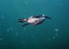 Под водой_149