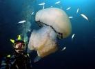 Под водой_156