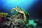 Под водой_163