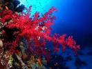 Под водой_170