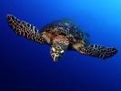 Под водой_173
