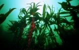 Под водой_177