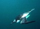 Под водой_178