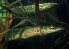 Под водой_196