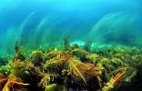 Под водой_25