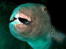 Под водой_44