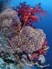 Под водой_60
