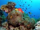 Под водой_76
