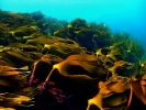 Под водой_77