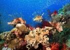 Под водой_92