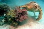 Под водой_93