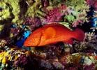Под водой_98